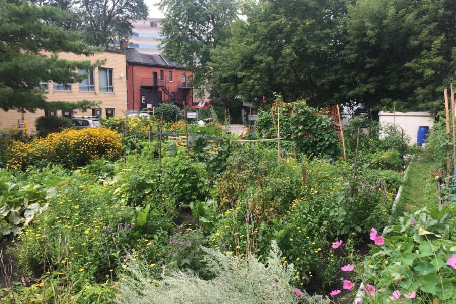 Phoenix Community Garden